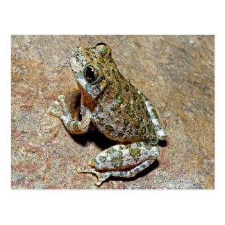 Cartão Postal Uma garganta Treefrog