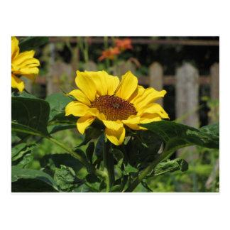 Cartão Postal Único girassol amarelo com folhas verdes