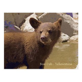 Cartão Postal Urso Cub, Yellowstone