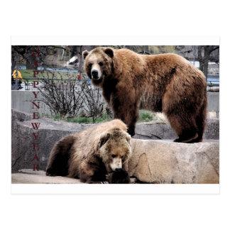Cartão Postal Urso de Brown