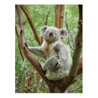 Cartão Postal Urso de Koala que senta-se na árvore no jardim