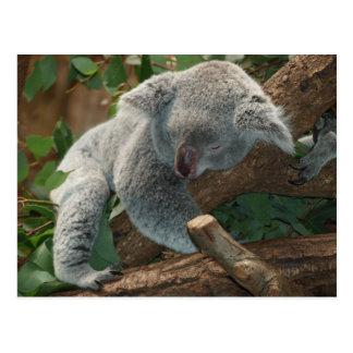 Cartão Postal Urso de Koala tão bonito