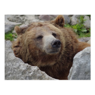 Cartão Postal Urso de Kodiak