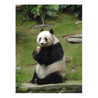 Cartão Postal Urso de panda que come algum bambu