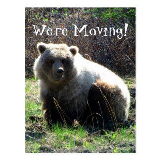 Cartão Postal Urso de urso carnudo de CGB