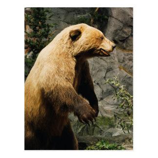 Cartão Postal Urso orgulhoso