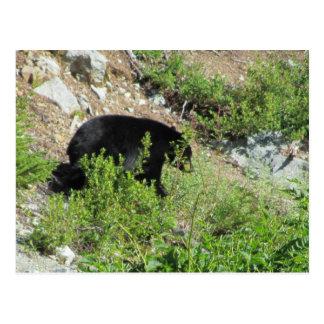 Cartão Postal Urso preto