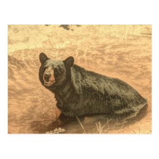 Cartão Postal urso preto dos animais selvagens do rio da região
