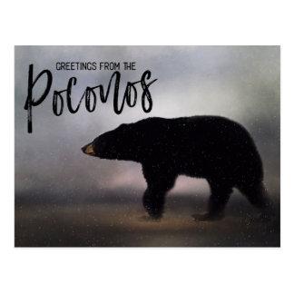 Cartão Postal Urso preto em cumprimentos do inverno do Poconos