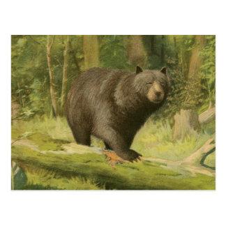 Cartão Postal Urso preto que pisa em um tronco de árvore