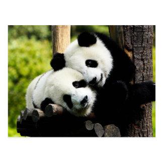 Cartão Postal Ursos de panda