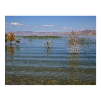 Cartão Postal UT, lago bear