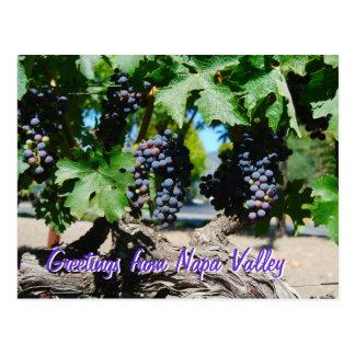 Cartão Postal Uvas do vinhedo de Napa na videira