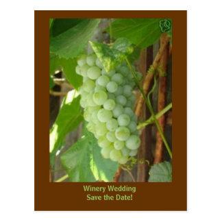 Cartão Postal uvas, economias do casamento da adega a data!