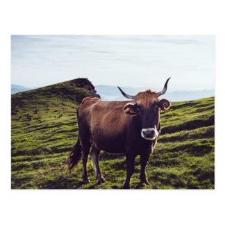 Cartão Postal Vaca bovina na paisagem bonita