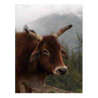 Cartão Postal Vaca da borda da estrada