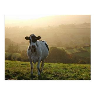 Cartão Postal Vaca da noite