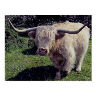 Cartão Postal Vaca das montanhas de Dartmoor no movimento