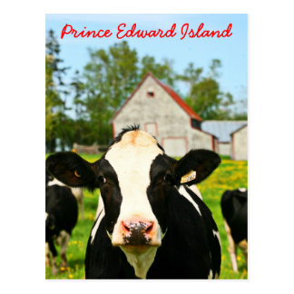 Cartão Postal Vaca de leiteria de Prince Edward Island