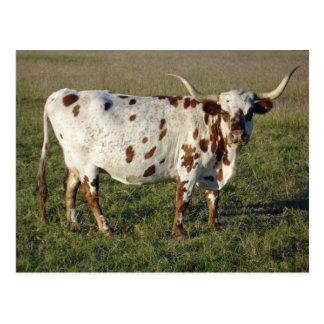 Cartão Postal Vaca de Texas Longhorn