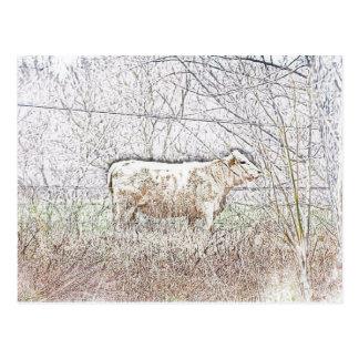 Cartão Postal Vaca do fosco