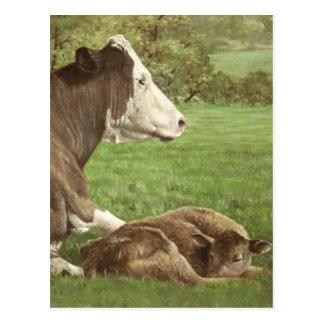 Cartão Postal vaca e vitela no campo