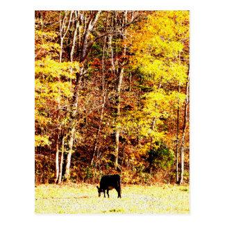 Cartão Postal Vaca no paraíso