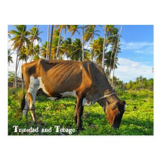 Cartão Postal Vaca que pasta entre árvores de coco