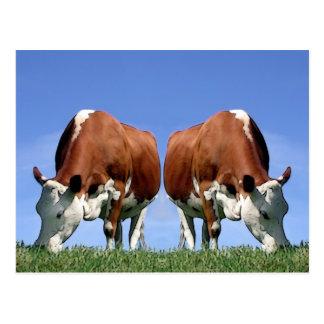 Cartão Postal Vacas
