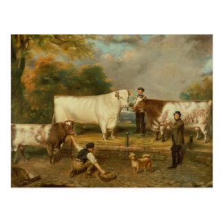 Cartão Postal Vacas com um pastor