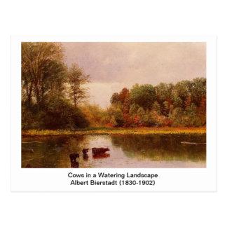 Cartão Postal Vacas em uma paisagem molhando por Albert B.