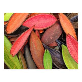 Cartão Postal Vagens coloridos da semente da colheita da