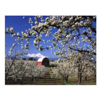 Cartão Postal Vale dos EUA, Oregon, Hood River, pomar da pera