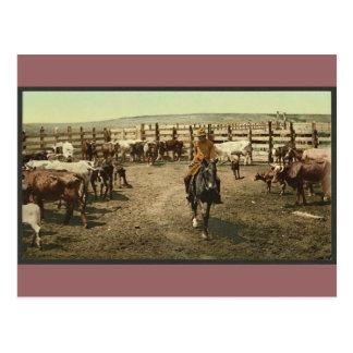 Cartão Postal Vaqueiros e vacas