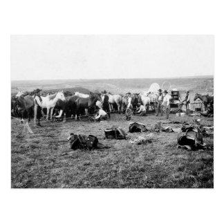Cartão Postal Vaqueiros que Hobbling cavalos: 1906