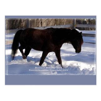 Cartão Postal Vazio do país das maravilhas do inverno do cavalo