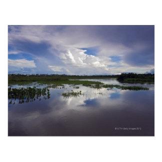 Cartão Postal Venezuela, delta Amacuro, delta de Orinoco