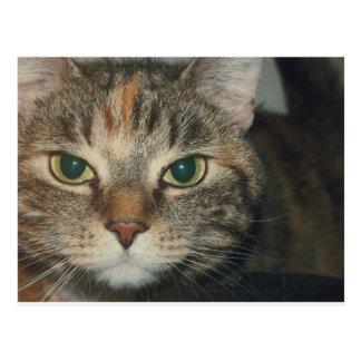 """Cartão Postal """"Venha se você desafio"""" diz o gato"""
