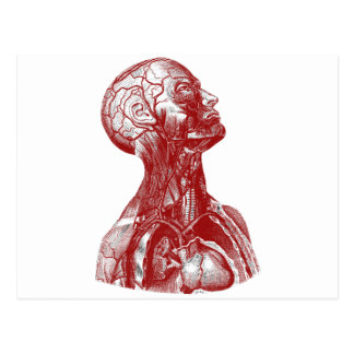 Cartão Postal Vermelho do busto da anatomia