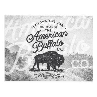 Cartão Postal Viagem americano de Montana do búfalo do vintage