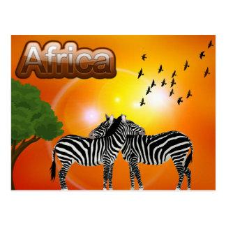 Cartão Postal Viagem da zebra do vintage de África do Sul