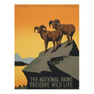 Cartão Postal Viagem dos animais selvagens dos parques nacionais