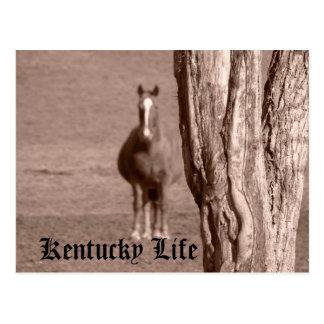 Cartão Postal Vida de Kentucky