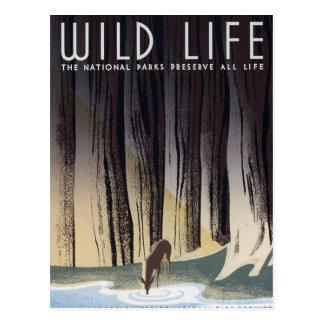 Cartão Postal Vida selvagem