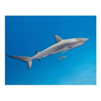 Cartão Postal Vida subaquática: Natação do perezi do