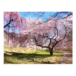 Cartão Postal Vila 01 da flor de cerejeira