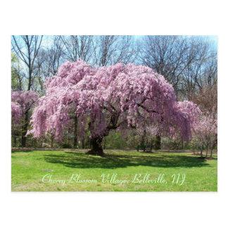 Cartão Postal Vila 03 da flor de cerejeira