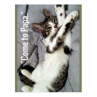 """Cartão Postal """"Vindo gato à papá"""""""