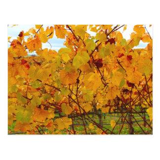 Cartão Postal Vinhedo da região vinícola de Napa Valley