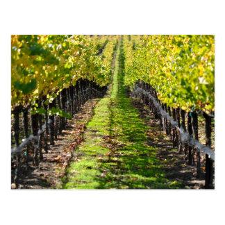 Cartão Postal Vinhedo da uva de Napa Valley Califórnia